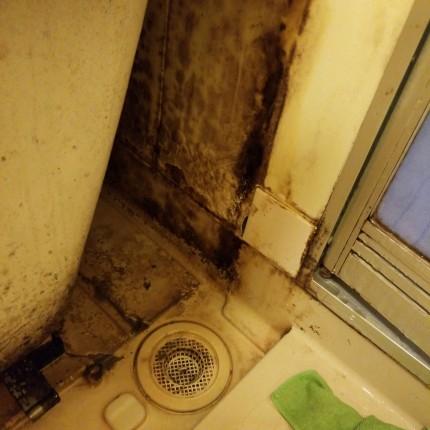 浴室エプロンカビ