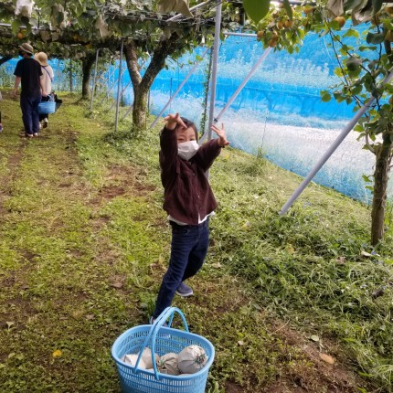 休日の梨狩り