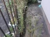 建物周辺除草