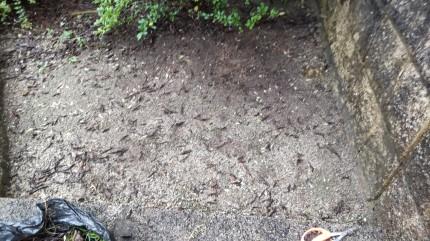 日常清掃除草