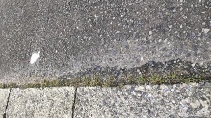 定期清掃除草